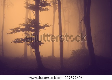 Strange tree silhouette in a foggy day in the forest during fall. Spooky scene