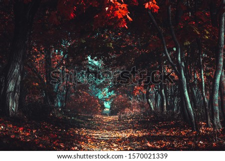Stranger forest. Mysterious road. Fairy woods. Mystical atmosphere. Paranormal another world. Cinematic Processing. Dark scary park with red leaves. Background wallpaper.