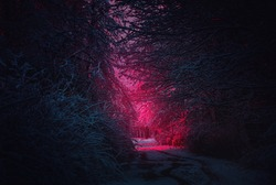 Stranger purple road. Winter landscape. Mysterious fairy forest. Background mystic atmosphere. Snowy fantastic forest. Dark fantasy wallpaper. Scary atmosphere in neon colors. Fairy forest in the fog