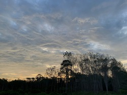 Stratocumulus Cloud Background Roll the clouds up in the sky Beautiful and unusual In the evening in Trang Province, Thailand.no focus