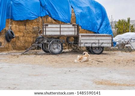 Straw bale. hay bales on farm.  #1485590141