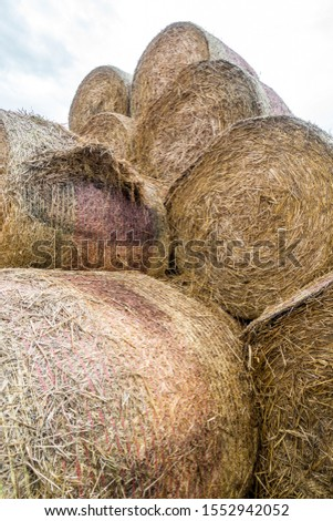 Straw bales and silage bales on the field #1552942052