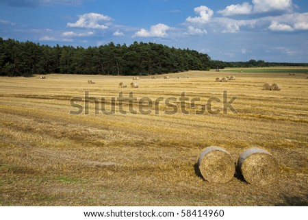 Straw bales at the field - stock photo