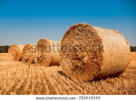 Straw bales at the wheat field. Summer background #703919599