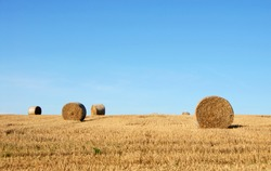 Straw bales in a field in Sussex, England, UK. The golden round bales contrast with the blue sky. Straw bales are a common sight on farms at harvest time. Bales of straw in the English countryside.