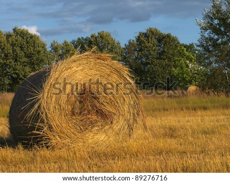 Straw bales in the fall in the evening sun