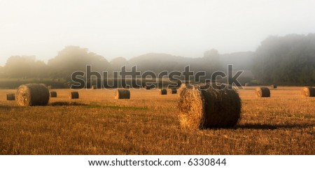 straw bales in the misty morning sun