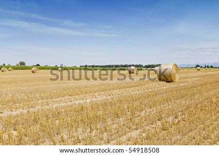 straw bales on farmland during harvest