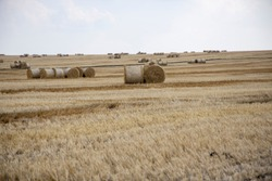 Straw bales on the field. Beautiful background with bales of straw. Landscape field with bales of straw.