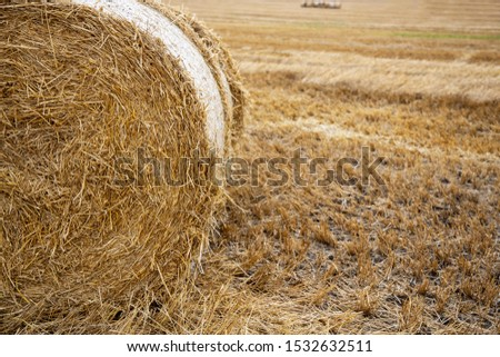 Straw bales on the field. Beautiful background with bales of straw. Landscape field with bales of straw. #1532632511