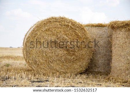 Straw bales on the field. Beautiful background with bales of straw. Landscape field with bales of straw. #1532632517