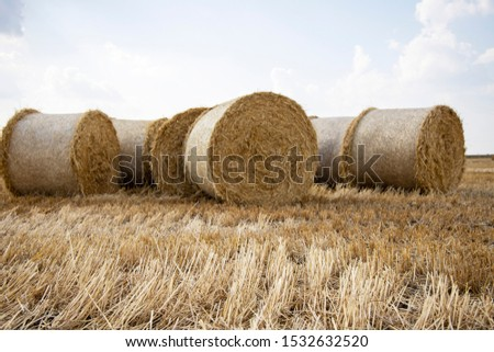 Straw bales on the field. Beautiful background with bales of straw. Landscape field with bales of straw. #1532632520