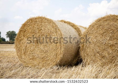 Straw bales on the field. Beautiful background with bales of straw. Landscape field with bales of straw. #1532632523