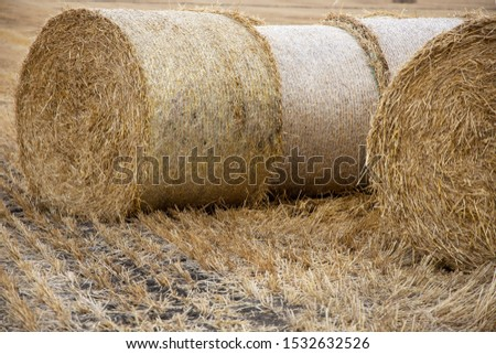 Straw bales on the field. Beautiful background with bales of straw. Landscape field with bales of straw. #1532632526