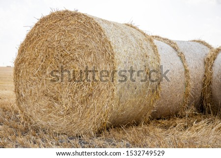 Straw bales on the field. Beautiful background with bales of straw. Landscape field with bales of straw. #1532749529