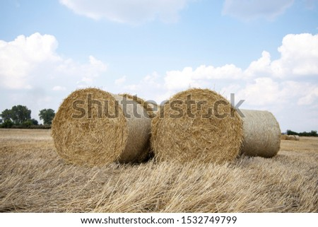 Straw bales on the field. Beautiful background with bales of straw. Landscape field with bales of straw. #1532749799