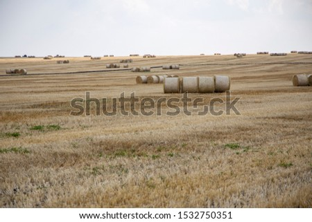 Straw bales on the field. Beautiful background with bales of straw. Landscape field with bales of straw. #1532750351