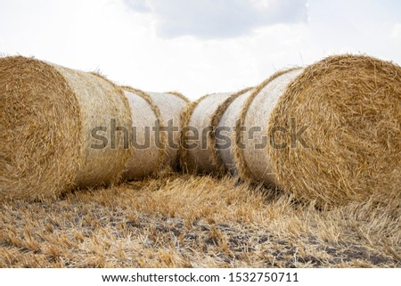 Straw bales on the field. Beautiful background with bales of straw. Landscape field with bales of straw. #1532750711
