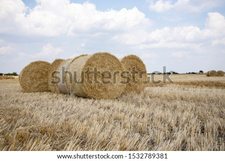 Straw bales on the field. Beautiful background with bales of straw. Landscape field with bales of straw. #1532789381
