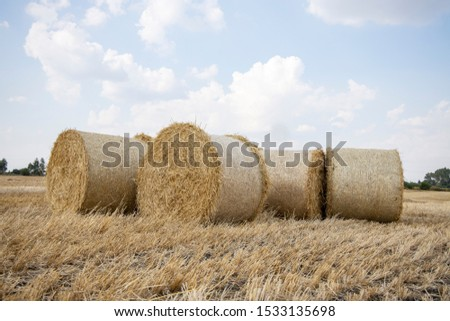Straw bales on the field. Beautiful background with bales of straw. Landscape field with bales of straw. #1533135698