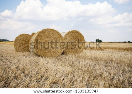 Straw bales on the field. Beautiful background with bales of straw. Landscape field with bales of straw. #1533135947