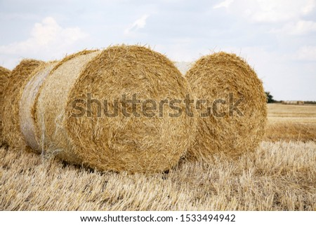 Straw bales on the field. Beautiful background with bales of straw. Landscape field with bales of straw. #1533494942
