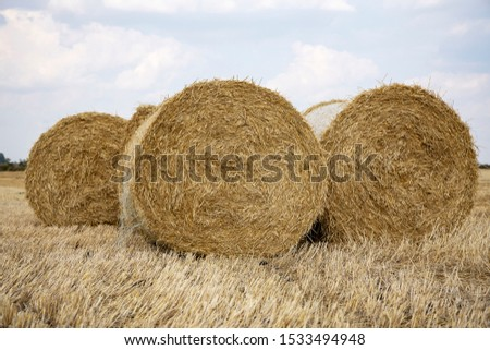 Straw bales on the field. Beautiful background with bales of straw. Landscape field with bales of straw. #1533494948