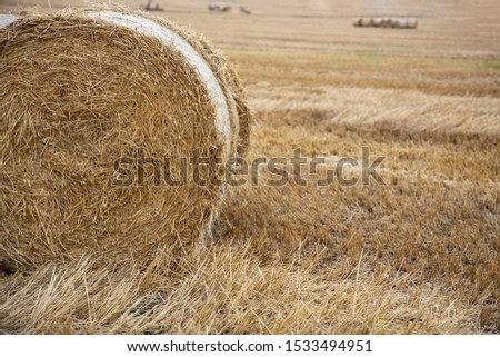 Straw bales on the field. Beautiful background with bales of straw. Landscape field with bales of straw. #1533494951