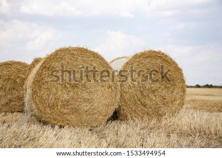Straw bales on the field. Beautiful background with bales of straw. Landscape field with bales of straw. #1533494954
