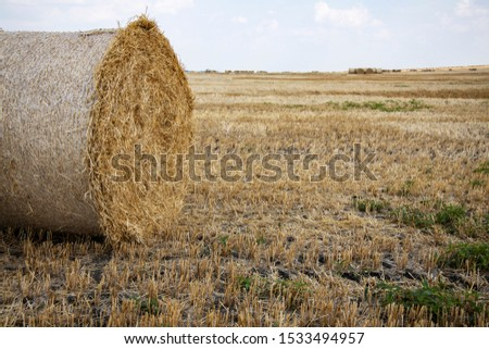 Straw bales on the field. Beautiful background with bales of straw. Landscape field with bales of straw. #1533494957