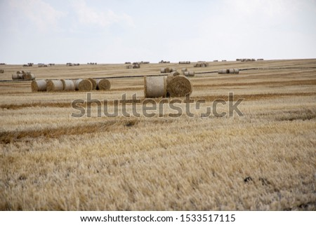 Straw bales on the field. Beautiful background with bales of straw. Landscape field with bales of straw. #1533517115