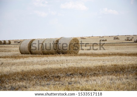 Straw bales on the field. Beautiful background with bales of straw. Landscape field with bales of straw. #1533517118