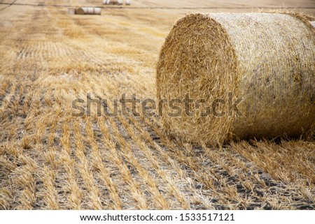 Straw bales on the field. Beautiful background with bales of straw. Landscape field with bales of straw. #1533517121