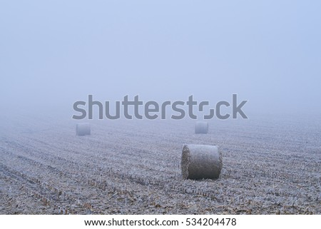 Straw bales on winter field #534204478