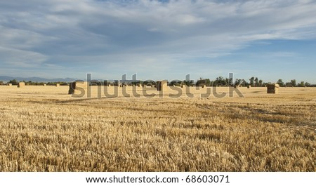 Straw bales wait stacking in a stubble field.