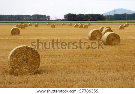 Straw ball on field