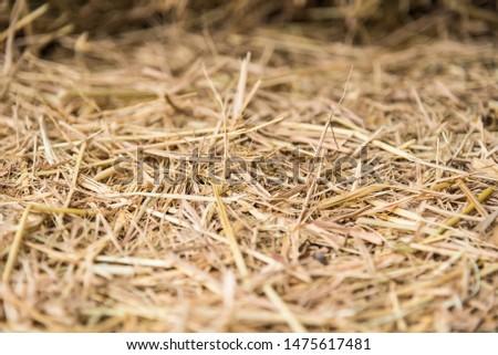 Straw, dry straw, straw background texture #1475617481