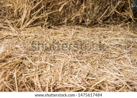 Straw, dry straw, straw background texture #1475617484