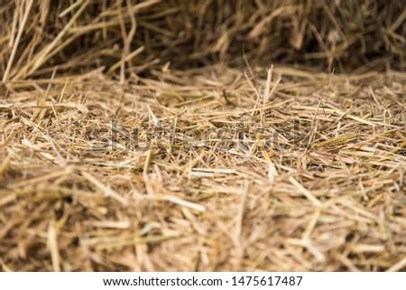 Straw, dry straw, straw background texture #1475617487