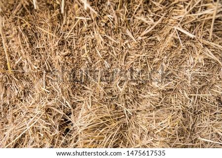 Straw, dry straw, straw background texture #1475617535