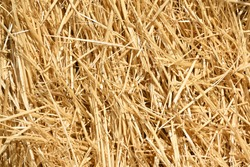 Straw, dry straw texture background, vintage style for design. Bright Golden texture of cut and scattered straw. Cut wheat
