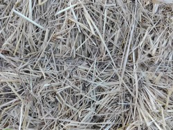 Straw for animal feed