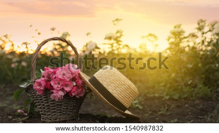 Straw hat and wicker basket with roses in field #1540987832