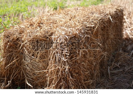 straw in rice field after reap