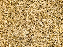 straw on the floor background