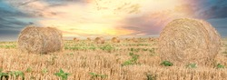 Straw rolls and dramatic cloud sunset, wonderful panoramic view field of straw bales, beautiful landscape