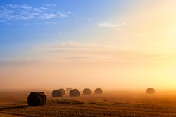 straw stacks on an agricultural field during a fog, agricultural field with stacks after harvest at dawn