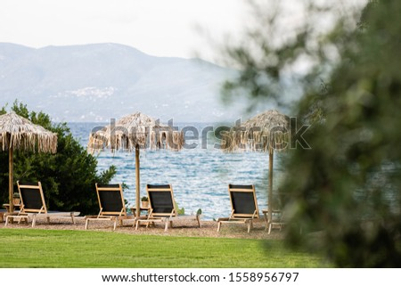 Straw sunshades and wooden sunbeds and turquoise water in the background and olive tree #1558956797
