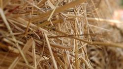 Straw texture ,Farm harvest.