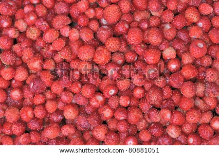 Strawberries. Forest red berries. The texture of wild strawberries. Scattering of ripe berries. Useful forest products. Harvested by hand.